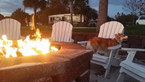 full time rving with dogs